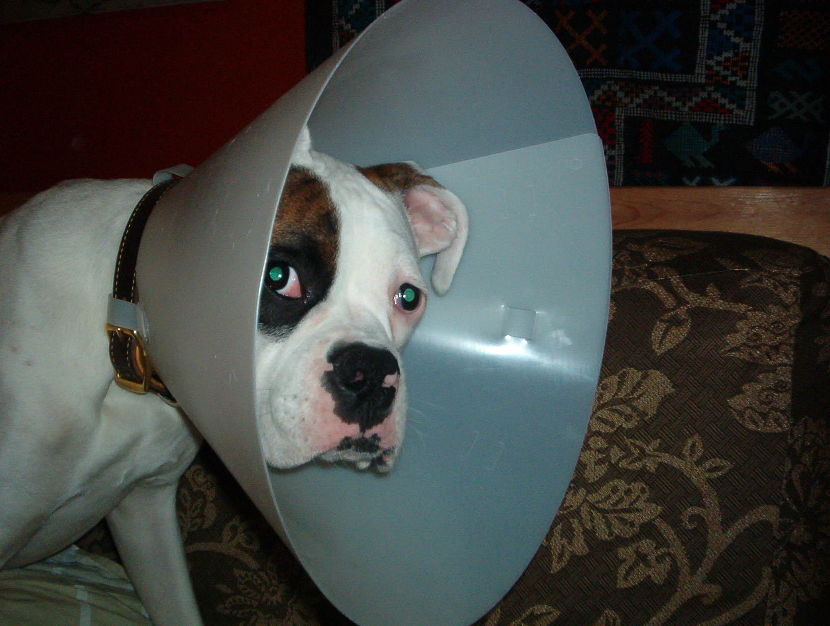 When and how to use a cone or muzzle pack of pets it becomes necessary for you to use the e collar when you notice that your dog scratches or even bites himself your dog might injure himself while aloadofball Gallery